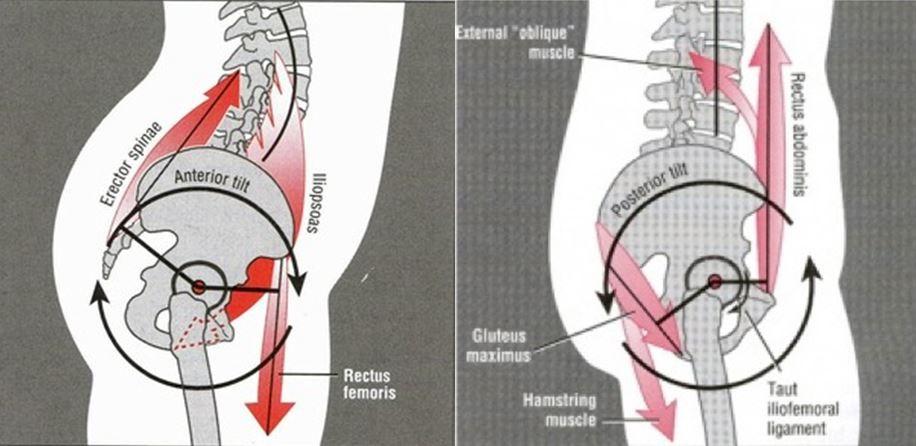 Obraz 8. Po lewej powstawanie lordozy, pogłębianie łuku w dole pleców. Po prawej proces odwrotny - niwelowanie krzywizny. Oba zjawiska w ekstremach uważane są za niezdrowe, najlepsze jest optium, czyli równowaga mięśniowa utrzymująca miednicę w miejscu.